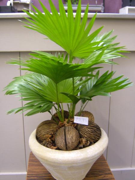 Planten antwerpen losse planten in po t plantenschalen bloeiende planten bloemen driesen - Buiten zenplanten ...