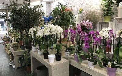Bloemen Driesen - Planten
